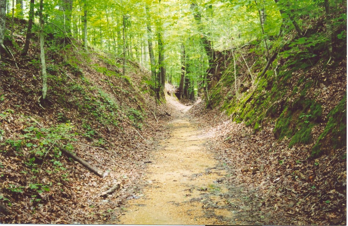 Get off the internet and explore Mississippi this summer. For instance, the Natchez Trace.